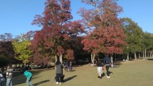 Kota Nara Jelang Musim Gugur