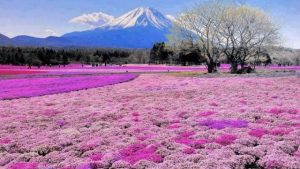 Impian Membingkai  Fuji-san Untuk Ayah
